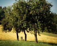 Δέντρα μηλιών με τα ώριμες μήλα και την καρέκλα Στοκ εικόνες με δικαίωμα ελεύθερης χρήσης
