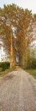 δέντρα μονοπατιών κάτω Στοκ Εικόνα