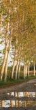 δέντρα μονοπατιών κάτω Στοκ εικόνα με δικαίωμα ελεύθερης χρήσης