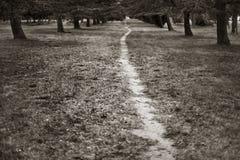 δέντρα μονοπατιών Στοκ Φωτογραφίες