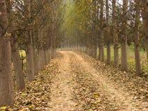 δέντρα μονοπατιών Στοκ φωτογραφία με δικαίωμα ελεύθερης χρήσης