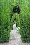 δέντρα μονοπατιών Στοκ Εικόνες