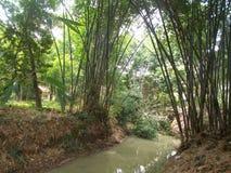 Δέντρα μπαμπού και ο μικρός ποταμός στο χωριό στοκ φωτογραφίες