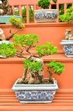 Δέντρα μπονσάι στον κήπο λουλουδιών πόλεων Στοκ φωτογραφία με δικαίωμα ελεύθερης χρήσης