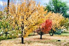 δέντρα Νοεμβρίου Στοκ φωτογραφία με δικαίωμα ελεύθερης χρήσης