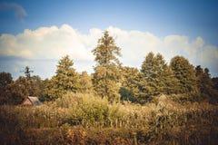 Δέντρα, οι Μπους, θερινός ουρανός χλόης με τα άσπρα σύννεφα Στοκ Φωτογραφία