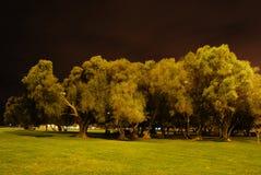 δέντρα ομάδας Στοκ εικόνες με δικαίωμα ελεύθερης χρήσης