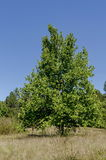 Δέντρα ομάδας το πρώιμο φθινόπωρο, Razgrad Στοκ φωτογραφίες με δικαίωμα ελεύθερης χρήσης