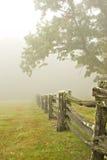 δέντρα ομίχλης φραγών Στοκ Φωτογραφία