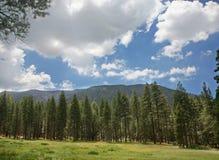 δέντρα ουρανού πεύκων βουνών στοκ εικόνες με δικαίωμα ελεύθερης χρήσης