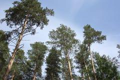 δέντρα ουρανού στοκ φωτογραφίες με δικαίωμα ελεύθερης χρήσης