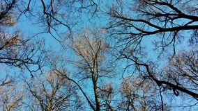 Δέντρα & ουρανός Στοκ Εικόνες