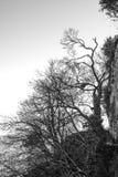 Δέντρα πάνω από το βουνό Στοκ φωτογραφίες με δικαίωμα ελεύθερης χρήσης