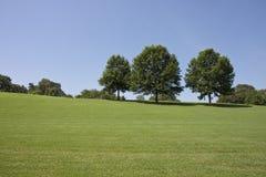 δέντρα πάρκων λόφων Στοκ εικόνα με δικαίωμα ελεύθερης χρήσης