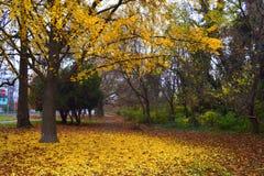 Δέντρα πάρκων πόλεων πτώσης Στοκ εικόνες με δικαίωμα ελεύθερης χρήσης