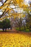 Δέντρα πάρκων πόλεων πτώσης Στοκ Φωτογραφίες