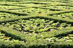 δέντρα πάρκων χορτοταπήτων στοκ φωτογραφίες