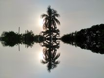 Δέντρα πέρα από τον ήλιο στοκ φωτογραφίες