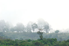 Δέντρα πίσω από την ομίχλη Στοκ φωτογραφίες με δικαίωμα ελεύθερης χρήσης