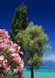 δέντρα παραλιών στοκ εικόνες