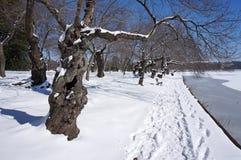Δέντρα παλιρροιακών λεκανών το χειμώνα Στοκ Φωτογραφία