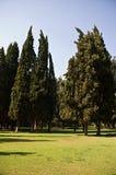 δέντρα πεδίων Στοκ φωτογραφίες με δικαίωμα ελεύθερης χρήσης