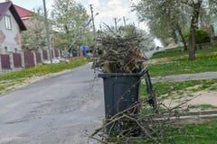 Δέντρα περικοπής κοπή μερικών κλάδων από το δέντρο στο οργανικό εμπορευματοκιβώτιο λιπάσματος στοκ φωτογραφίες με δικαίωμα ελεύθερης χρήσης