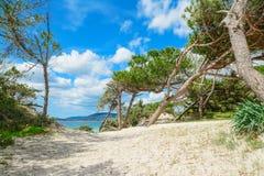 Δέντρα πεύκων από Alghero την ακτή Στοκ εικόνα με δικαίωμα ελεύθερης χρήσης