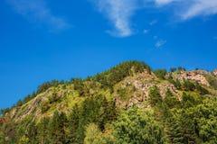 δέντρα πεύκων βουνών Altai, νότια Σιβηρία στοκ φωτογραφία με δικαίωμα ελεύθερης χρήσης