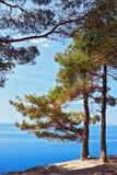 Δέντρα πεύκων λειψάνων σε ένα seacoast όμορφο φυσικό τοπίο απότομων βράχων Στοκ Εικόνες