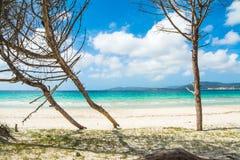 Δέντρα πεύκων θαλασσίως στη Σαρδηνία Στοκ φωτογραφίες με δικαίωμα ελεύθερης χρήσης