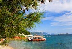 Δέντρα πεύκων θαλασσίως στοκ φωτογραφίες