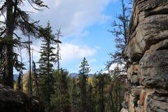 Δέντρα πεύκων ιασπίδων Στοκ εικόνες με δικαίωμα ελεύθερης χρήσης