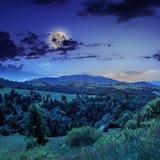 Δέντρα πεύκων κοντά στην κοιλάδα στα βουνά στη βουνοπλαγιά τη νύχτα Στοκ Φωτογραφία