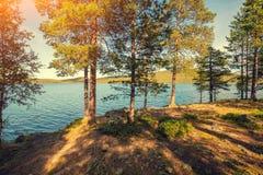 Δέντρα πεύκων κοντά στη θάλασσα Στοκ φωτογραφία με δικαίωμα ελεύθερης χρήσης