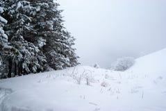 δέντρα πεύκων ομίχλης Στοκ εικόνα με δικαίωμα ελεύθερης χρήσης