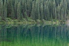 Δέντρα πεύκων που απεικονίζονται στο νερό Στοκ εικόνες με δικαίωμα ελεύθερης χρήσης