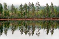 Δέντρα πεύκων που απεικονίζονται στο Tarn Στοκ Εικόνες