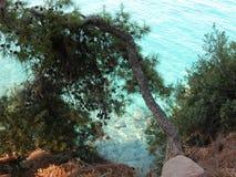 Δέντρα πεύκων που αυξάνονται στους ελληνικούς απότομους βράχους νησιών, Agistri Στοκ Εικόνα