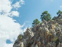 Δέντρα πεύκων στην άκρη απότομων βράχων Στοκ Φωτογραφία