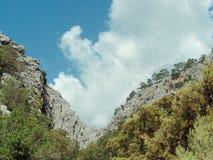 Δέντρα πεύκων στην άκρη απότομων βράχων Στοκ εικόνα με δικαίωμα ελεύθερης χρήσης