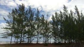 Δέντρα πεύκων στην άκρη της θάλασσας στοκ φωτογραφία
