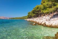 Δέντρα πεύκων στην αδριατική παραλία κοντά σε Trogir, Κροατία Στοκ Εικόνες