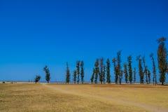 Δέντρα πεύκων στην παραλία Στοκ Φωτογραφία