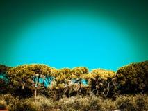 Δέντρα πεύκων στο υπόβαθρο μπλε ουρανού στοκ φωτογραφία