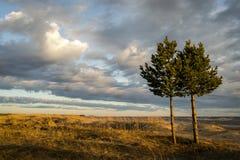 Δέντρα πεύκων Στοκ φωτογραφία με δικαίωμα ελεύθερης χρήσης