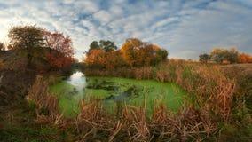 δέντρα ποταμών κίτρινα Στοκ φωτογραφία με δικαίωμα ελεύθερης χρήσης