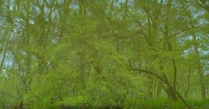 Δέντρα που απεικονίζονται πράσινα στο νερό Στοκ φωτογραφία με δικαίωμα ελεύθερης χρήσης