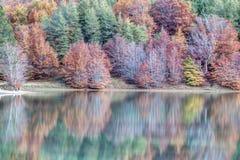 Δέντρα που απεικονίζονται στη λίμνη Στοκ φωτογραφία με δικαίωμα ελεύθερης χρήσης