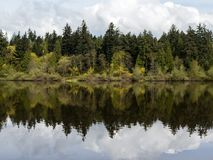 Δέντρα που απεικονίζουν στη χαμένη λιμνοθάλασσα στο πάρκο του Stanley στο Βανκούβερ Στοκ Φωτογραφία